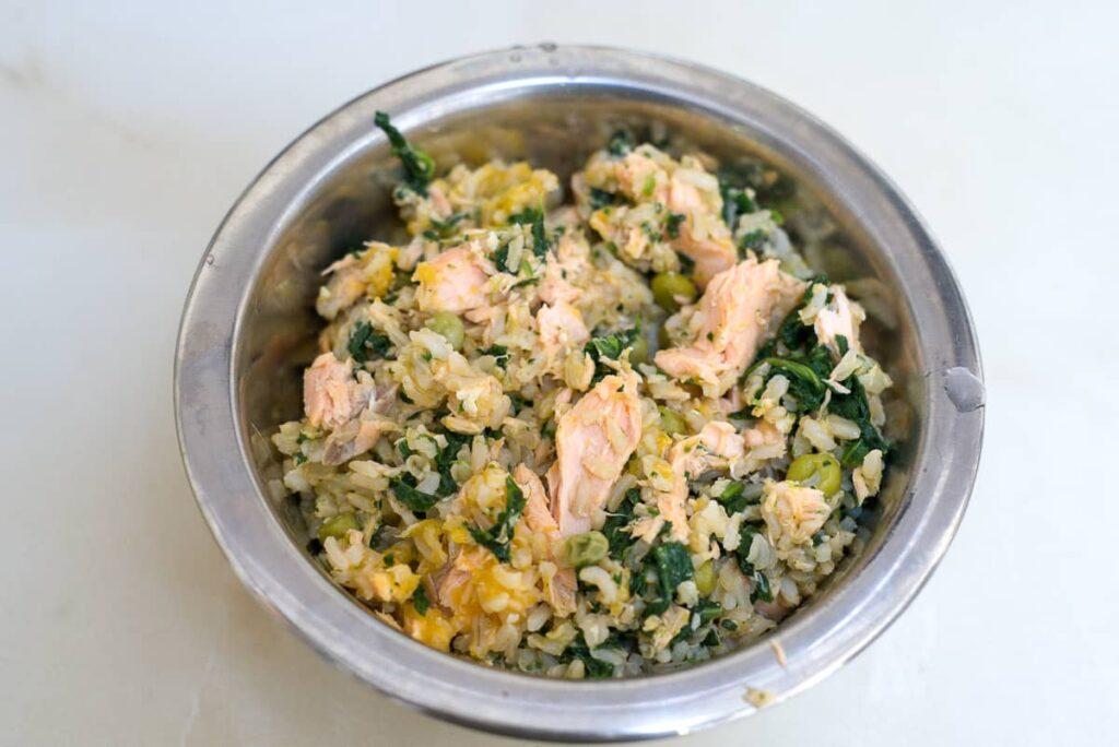 salmon dog food